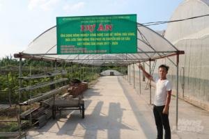 Ứng dụng công nghệ cao trồng dưa lưới, dưa vàng