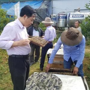 VinaCert đánh giá VietGAHP ong tại cơ sở nuôi ong Đoàn Đình Khính